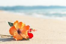 砂浜とハイビスカス