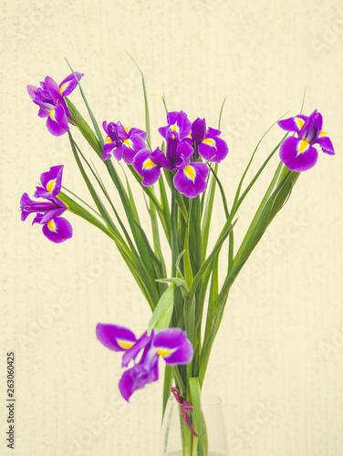 Poster Iris spring flowers on white background