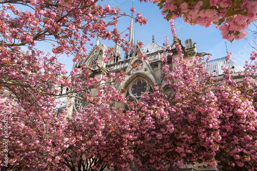 Spring trees in paris Wallpaper Mural