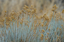 Closeup Of Desert Plant In Win...