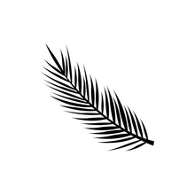 Palm Leaves Set. Banana, Coconut, Date Palm Leaves Icon, Logo Isolated On White