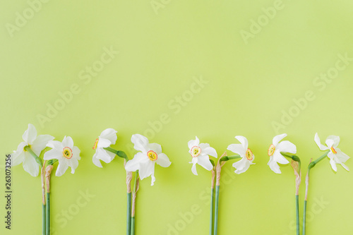 Photo sur Aluminium Narcisse Flat lay composition with white daffodils on a green background