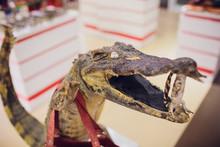 Stuffed Crocodile On Display F...
