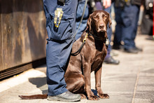 K9 Police Dog Together With Of...