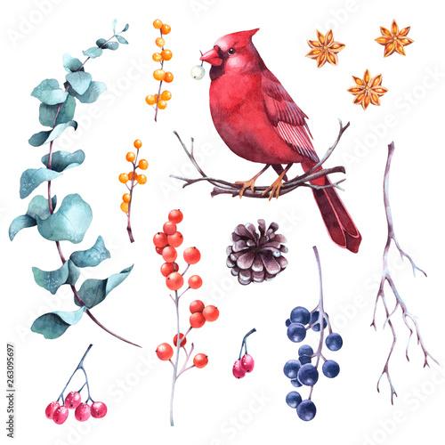 Set of watercolor winter berries, eucalyptus, cones, twigs and cardinal bird Fototapete