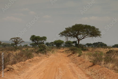 Fototapeta Road through the African savannah, a picture made on safari in Uganda. Acacia trees and palms and dry grassland, which host lot of large animals. obraz na płótnie