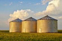 Metal Grain Silos In Farm Field