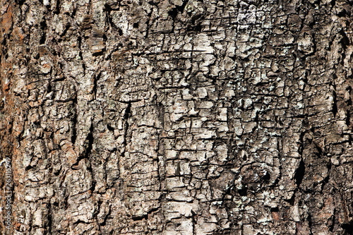 Birch bark close up - texture for background Canvas-taulu