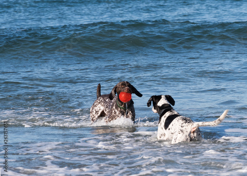 Photo  Dogs Playing in the Ocean
