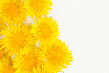 Dandelion On White Background....