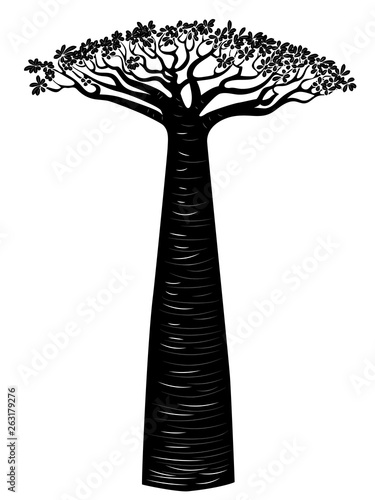 Fotografía Baobab tree design