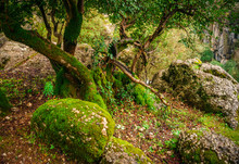Idyllic Forest Landscape With Mossy Stone, Mossy Tree Trunk And Its Root. Manavgat, Antalya, Turkey.
