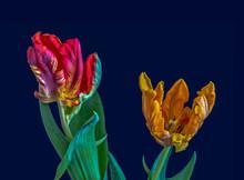 Fine Art Still Life Colorful M...