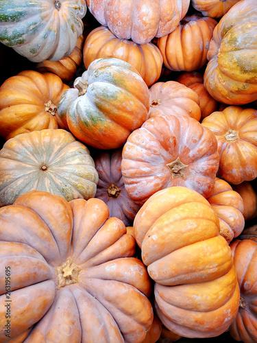 Obraz big pumpkins - fototapety do salonu