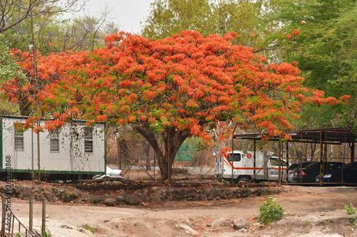 Fotografie, Obraz  Safari Afrika