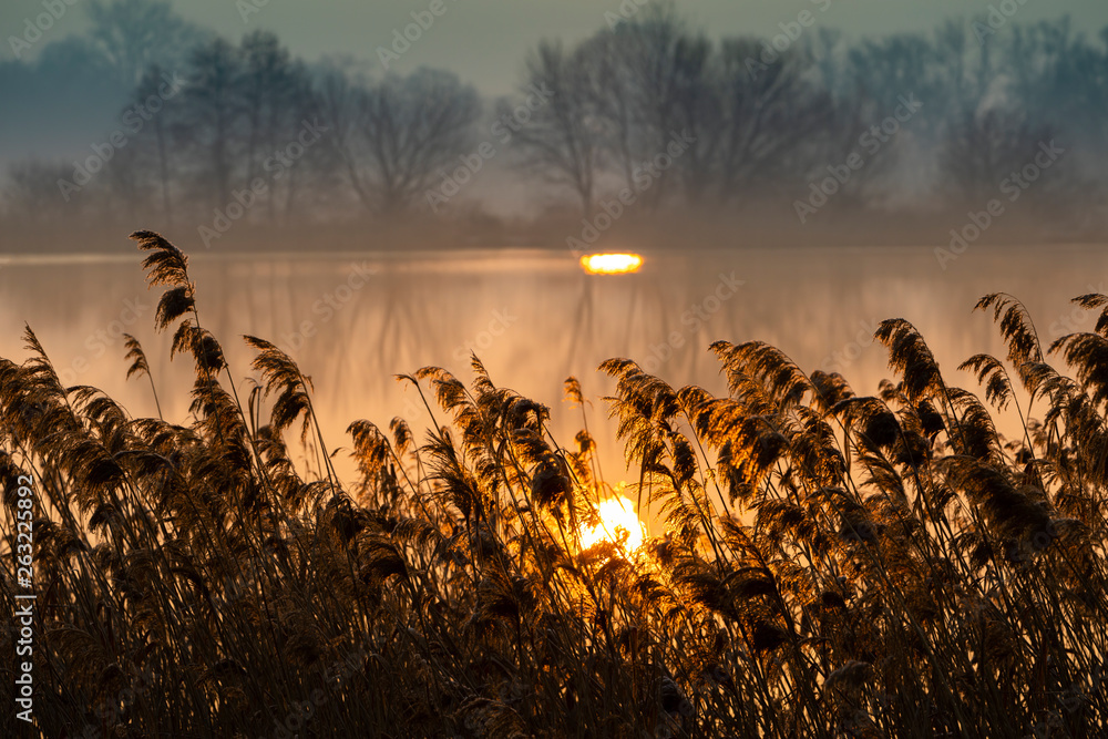 Fototapety, obrazy: sunrice over Jaroslavice pond, Czech Republic