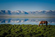 Horse At Song Kul Lake In Kyrg...