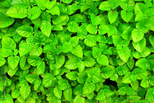 Green Leaves Background. - 263248668