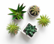 Various Cacti And Succulent Plants In Pots On White Background