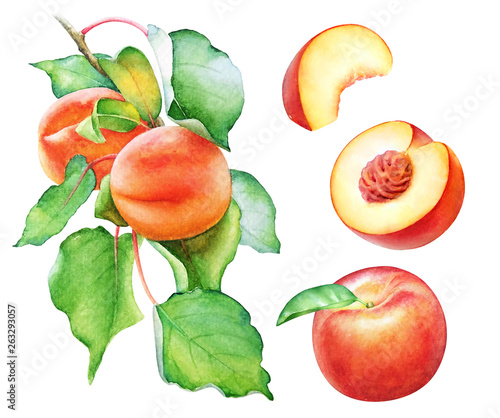 Fotografia Watercolor peach tree branch with fruits and leaves.
