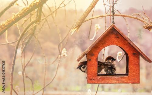 Fotografija Sparrows in wooden feeding trough