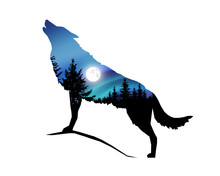 Silhouette Of Howling Wolf With Coniferous Trees On The Background Of Colorful Sky. Moonlight.