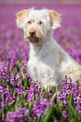 Foto  Hund im Blumenmeer