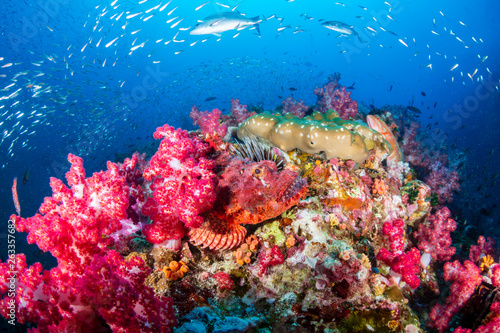 Foto op Aluminium Onder water Well camouflaged Scorpionfish on a tropical coral reef