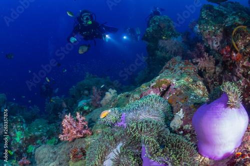 Fototapeta SCUBA divers over a colorful tropical coral reef in Thailand obraz na płótnie