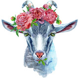 Goat horoscope character watercolor illustration isolated on white background. - 263359433