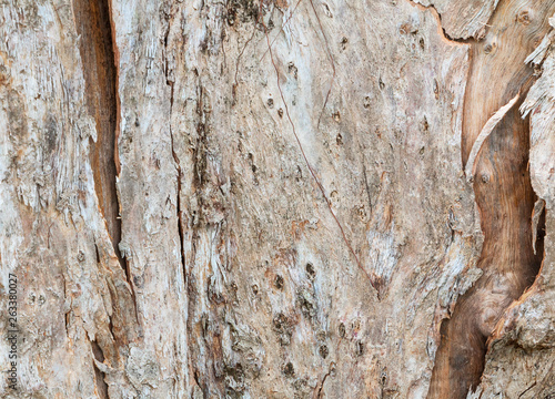 Canvas Prints Textures tree trunk nature. bark texture pattern wood for background image horizontal