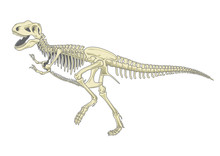 Illustration Of Tyrannosaurus ...