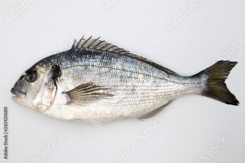 Poster Fish SEA BREAM Sparus Aurata, Fish of Bream family Sparidae