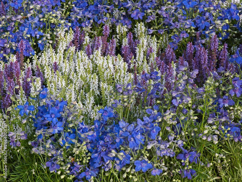Colour co-ordinated flower border in a country garden