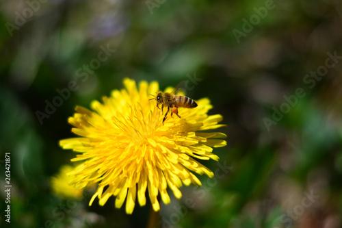 Photo Il grande lavoro delle api