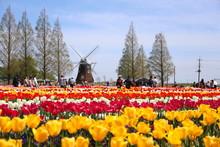 日本の千葉県にある あけぼの山農場公園 風車と色とりどりのチューリップ