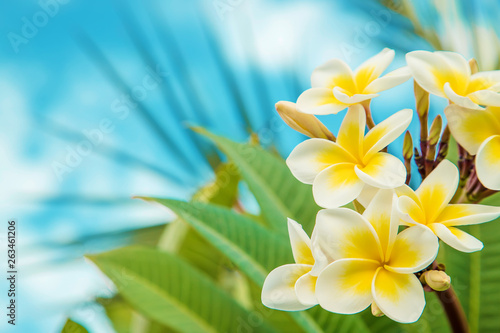 Foto auf Leinwand Spa Plumeria flowers blooming against the sky. Selective focus.