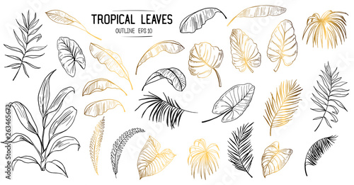 Fototapeta Set of tropical leaves. Hand drawn sketches traced in vector obraz na płótnie