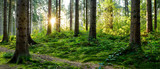 Fototapeta Las - Beautiful forest panorama in spring with bright sun shining through the trees