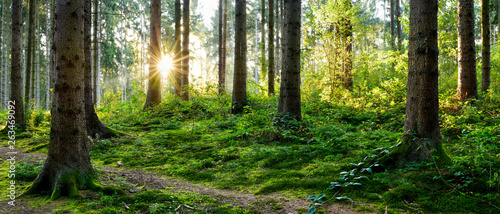 Fotobehang Grijze traf. Beautiful forest panorama in spring with bright sun shining through the trees