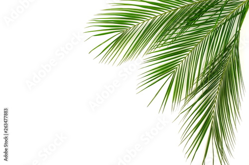 Cuadros en Lienzo tropical green palm leaves , branches pattern frame on a white background
