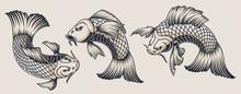Set Of Koi Carp Illustrations