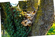 Moldy Mushroom On A Tree