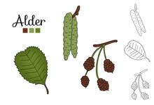 Vector Set Of Alder Tree Elements Isolated On White Background. Botanical Illustration Of Alder Leaf, Brunch, Flowers, Fruits, Ament, Cone. Black And White Clip Art.