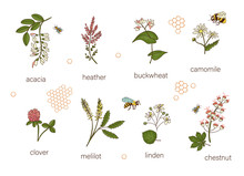 Vector Set Of Colored Wild Flo...