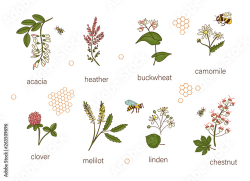 Vector set of colored wild flowers Wallpaper Mural