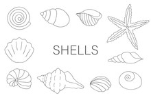 Vector Black And White Set Of Sea Shells Isolated On White Background. Monochrome Marine Collection. Underwater Illustration