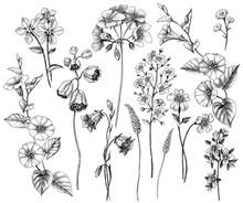 Hand Drawn Wild  Flowers Set