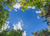 Fototapeta Na sufit - trees and blue sky
