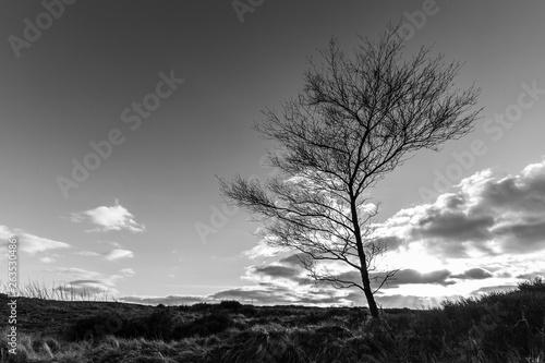 Spoed Foto op Canvas Grijze traf. Tree at Ogden